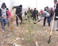 В столице Тувы приступают ко второму этапу озеленения дворов