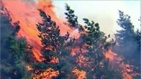 Жара, удары молнии, ветер – повышают уровень пожарной опасности в Туве