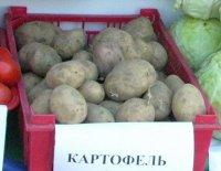Кызылчане смогут посадить картошку недалеко от Ээрбека
