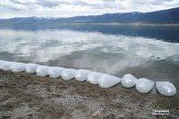 В Чагытай запустили 2,5 млн. мальков пеляди