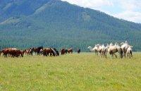 В Туве распределены субсидии сельским товаропроизводителям