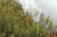 Грозы спровоцировали лесные пожары на Тодже. Введен режим ЧС