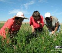 Тува: Пастбищно-кормовую конференцию ученых проигнорировали сельхозпроизводители