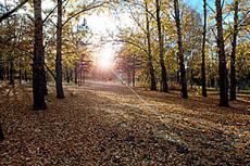 Осень в Кызыле. Фото Виталия Шайфулина