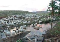 Барунхемчикские животноводы ставят задачу - нагулять скот