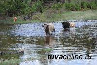 В Туве открылся проезд по автодороге Кызыл - Сарыг-Сеп