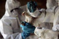"""В крови птиц на озере Убсу-Нур (Тува) обнаружен """"птичий"""" рынок"""