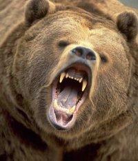 Медведь, забредший в столицу Тувы, был болен бешенством