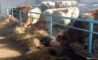 Сельхозпредприятие ООО «Туранское» претендует на поддержку Минсельхоза России