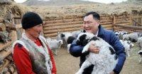 В Туве в хозяйстве чабана-тысячника появилась новая порода многоплодных овец
