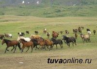 Развитие коневодства в Туве станет одним из сельхозприоритетов