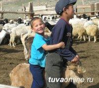 Козоводческое хозяйство из Бай-Тайги (Тува) - лучшее на межрегиональной выставке