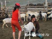 Тувинские козы получили рекомендацию в российский реестр селекционных достижений