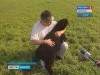 Иркутский фермер планирует закупать племенных овец из Тувы