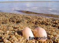 На одном из самых живописных озер Тувы открылась турбаза