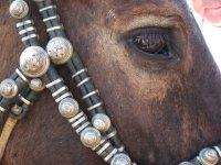 В Туве оперативно задержаны скотокрады, угнавшие 6 лошадей