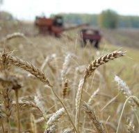Хлеборобы Тувы ведут уборку зерновых