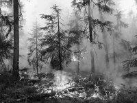 В Туве ликвидирован крупный лесной пожар