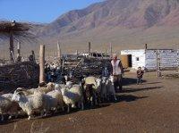 Шолбан Кара-оол: Сельское хозяйство - долгосрочный приоритет республики