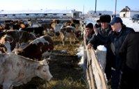 Балгазынскую молочно-товарную ферму планируют перестроить