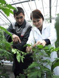 В реконструированных теплицах ожидают очередной урожай огурцов и помидоров