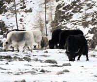 Труднодоступный монгунтайгинский кожуун Тувы станет ближе