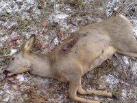 В Туве вскрыты факты злостного браконьерства в государственном заказнике