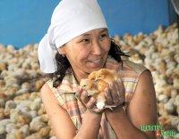 На тувинской птицефабрике в 2011 году получено более 4 млн. яиц