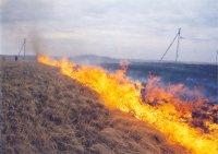 В Туве энергетики заменяют опоры, сгоревшие в результате отжига травы