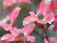 В столице Тувы стартовал ежегодный конкурс «Цветущий Кызыл»