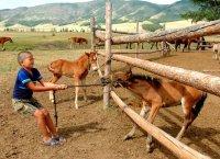 В Туве в рамках федеральной программы поддержат 16 начинающих фермеров