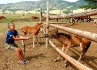 В Туве 9 молодых фермеров и 4 крестьянских хозяйства получат солидную государственную поддержк