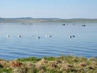 «Тихий» сезон на озере Чагытай (Тува)