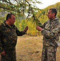 Тува. Лесопатологи изучают причины усыхания кедровых насаждений