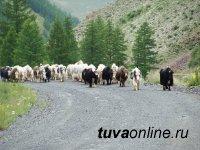 В труднодоступном Монгун-Тайгинском районе Тувы отремонтированы самые сложные участки автодороги