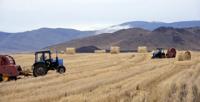 Несмотря на серьезные испытания, земледельцы Тувы завершают уборку зерновых культур