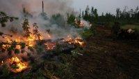 Все природные пожары в Туве, где горело 70 га леса, ликвидированы