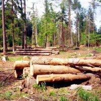 В Туве за 9 месяцев выявлено 76 фактов незаконной рубки леса