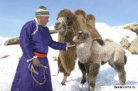 В Туве плотный наст снега затрудняет прохождение зимовки скота