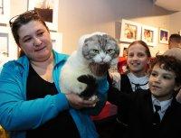 В Туве заводчики Барнаула провели выездной показ породистых кошек