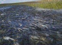 В Туве введен весенний нерестовый запрет на ловлю  рыбы
