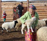 26 британских герефордов поселились в приграничном кожууне Тувы