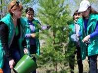 У кызылских семей есть возможность посадить свою сосну на Аллее поколений