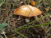 """Собирательницу грибов, потерявшуюся на станции """"Тайга"""", нашли спустя сутки"""
