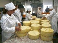 В Новосибирске пройдет фестиваль-ярмарка «Дни алтайского сыра»