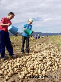 Средняя урожайность овощных культур на полях Тувы – от 110 до 227 ц/га