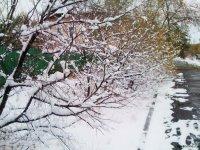 В Тес-Хемском кожууне Тувы на дорогах первый снег