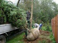 Еще 200 сосен дополнили Аллею поколений в Кызыле