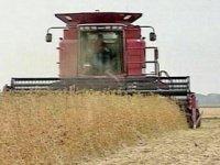 В Туве уборка зерновых вступает в завершающую стадию