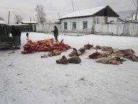 Разбойники-рецидивисты, укравшие стадо скота, задержаны в Туве